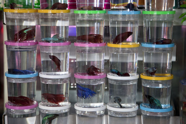 Transparent cilinders with small fish on display at one of the fish stalls of the market | Shanghai | China