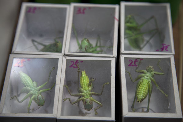 Crickets in boxes at the market | Flowers, fish, birds and insects market | China