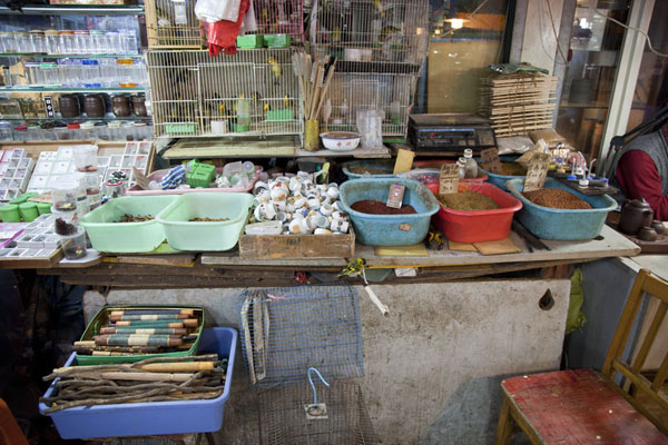 Small birds, insects, wooden sticks, and much more for sale at the market | Flowers, fish, birds and insects market | China