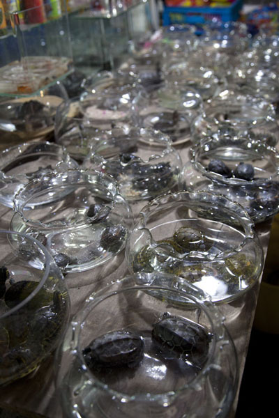 Glass pots with small tortoises for sale at the market | Flowers, fish, birds and insects market | China
