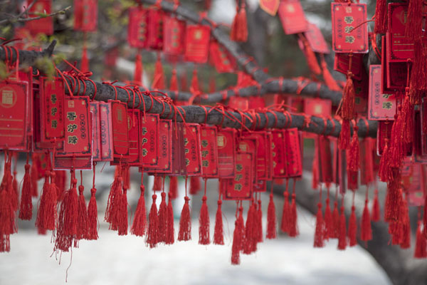 Foto van Red tokens attached to branches of a tree on top of Xianglu Feng, or Incense Burner PeakBeijing - China