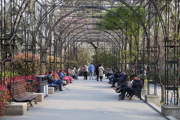Picture of Lane with benches in Fuxing parkShanghai - China