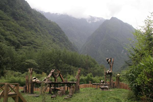 Picture of Large area for giant pandas at Wolong Research Centre