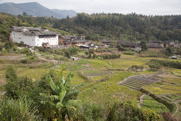 View over terraced fields with Kuiju Lou | Hongkeng Tulou Cluster | China