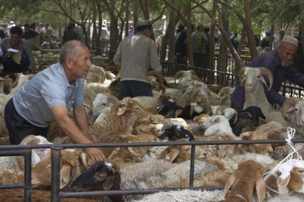 Picture of Keeping the sheep under control at Hotan bazaar