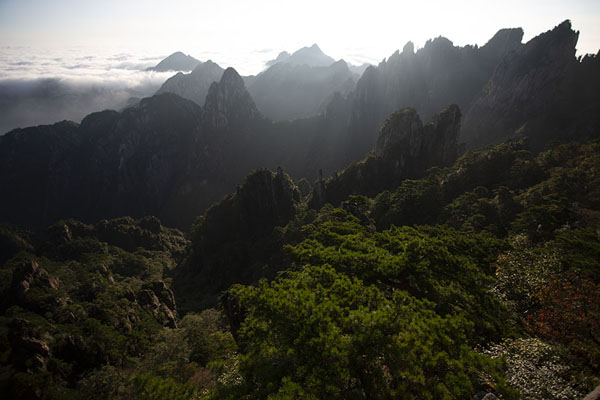 Morning view over the granite peaks and the vegetation above the sea of clouds | Huangshan Mountains | Chine
