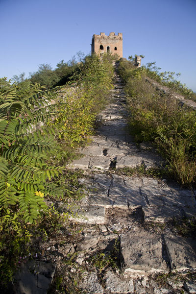 Trail overgrown by grass leading to one of the watchtowers | Jinshanling Great Wall | China