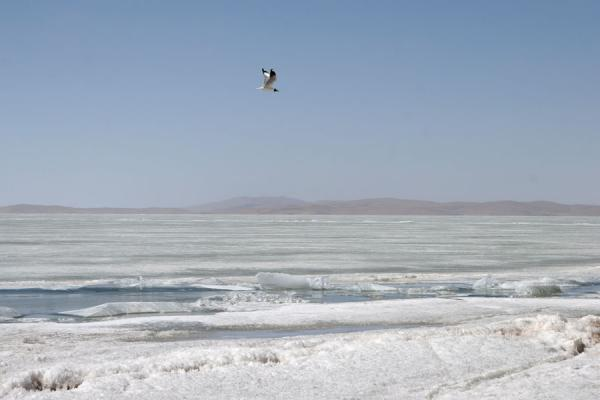 Bird flying over the frozen surface of Lake Ngoring | Ngoring Lake | China