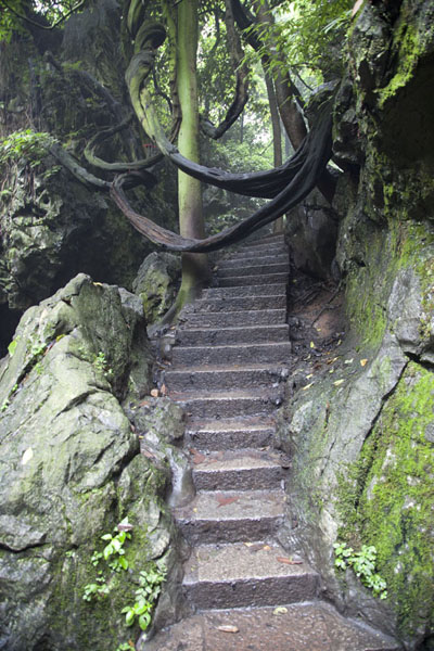 Picture of Branches hanging over stone stairs leading up Feilai Feng, or the Peak that flew hither