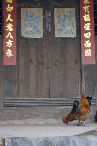 Chicken at a traditional wooden door in Matang | Matang Village | China