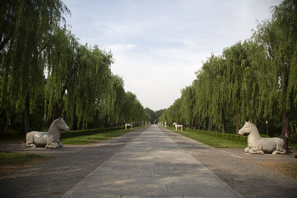 Foto di The Spirit Way, or Sacred Way, leading from the Stele Pavilion to the Dragon-Phoenix gate, lined by sculpted animals and officials - Cina - Asia