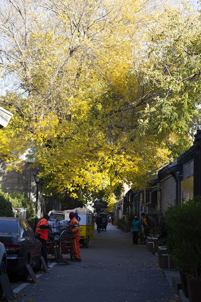 Wider street with trees in autumn colours | Nanluogu hutongs | Cina