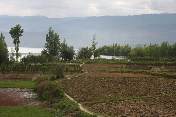 Agriculture on the shore of Qionghai Hu lake | Qionghai-Hu Lake | China