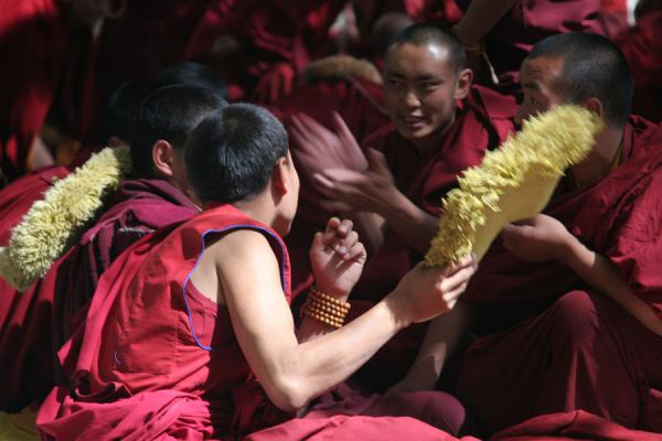 Picture of Sera monastery (China): Afternoon debate session at Sera monastery
