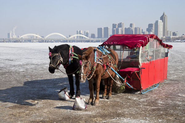 Horse carriage on the Songhua river | Songhua Winter Activities | China