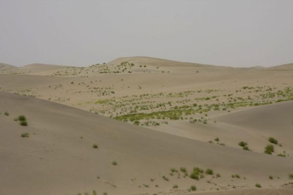Sand dunes with a green touch of plants in the Taklamakan Desert | Autostrada del deserto di Taklamakan | Cina