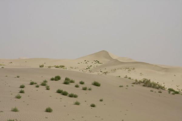 Sand dunes with small shrubberies in the Taklamakan Desert | Autostrada del deserto di Taklamakan | Cina