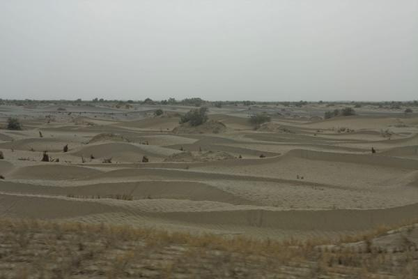 Picture of Taklamakan Desert Highway (China): Sand dunes everywhere in the Taklamakan Desert