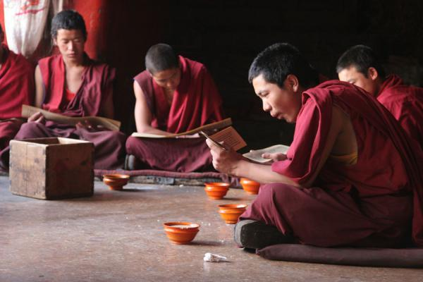 Monks of Tashilhunpo monastery studying their religious scriptures | Tashilhunpo monastery | China