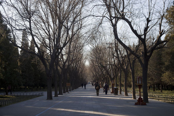 One of the many tree-lined paths through the park | Temple of Heaven Park | China
