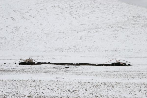 Foto van Black yak-hair tents in the snow of Qinghai province - China - Azië