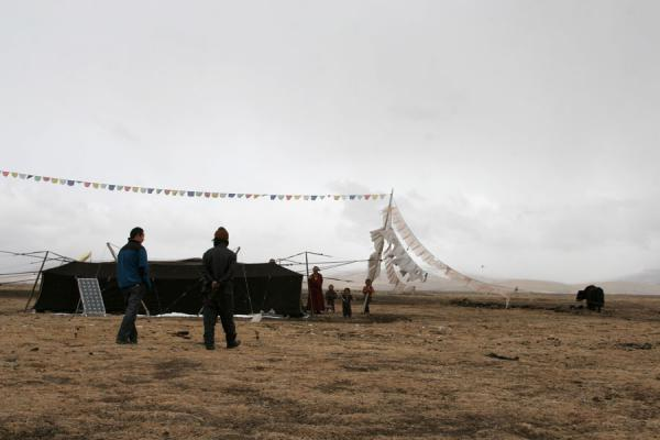 Picture of Tibetan nomads (China): Tibetan nomad tent with solar panel and yak