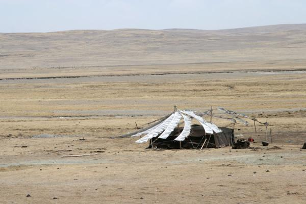 Picture of Tibetan nomads (China): Prayer flags flying over a lonely Tibetan nomad tent