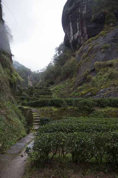 Foto van The tea plantations around DahongpaoWuyishan - China