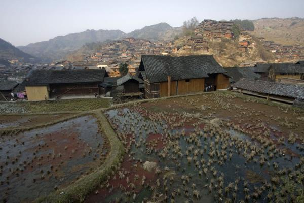 Rice paddies and houses near Xijiang village | Xijiang | China