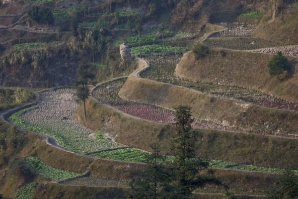 Some of the rice terraces near Xijiang | Xijiang | China