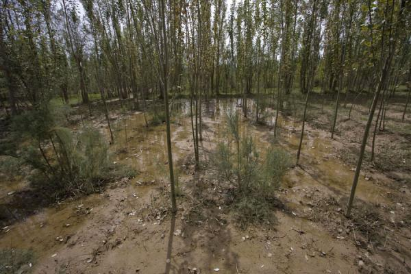 Trees in a marshy area near the Yotkan ruins | Yotkan ruins | China