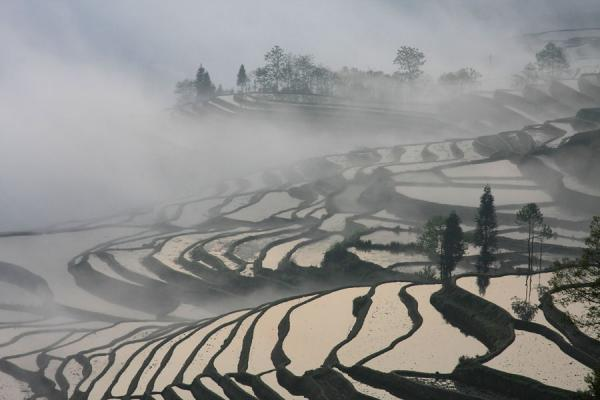 Picture of Clouds creeping up the rice terraces of Duoyishu in the early morning