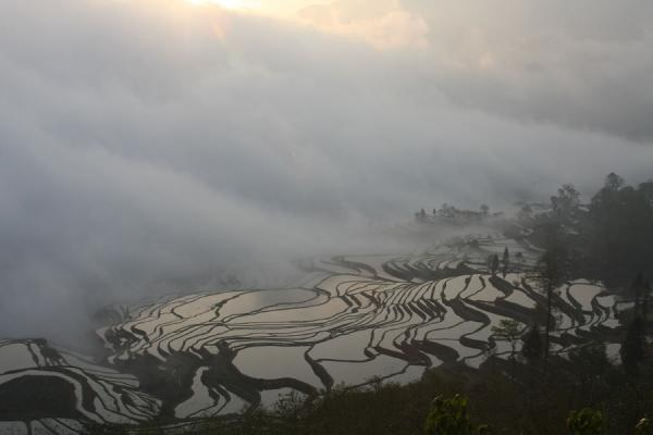 Foto van Duoyishu rice terraces clad in morning cloudsYuanyang - China