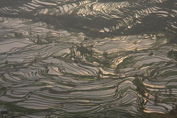 Looking down at the complex rice terrace fields of Tiger Mouth | Yuanyang rice terraces | China