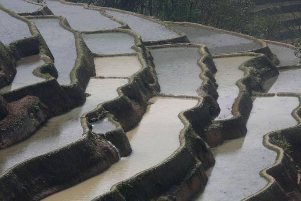 Foto van Close-up of rice terraces at BadaYuanyang - China
