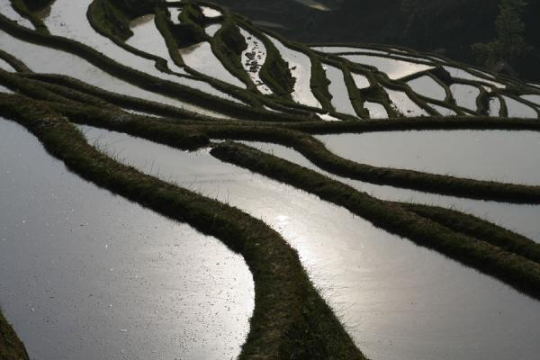 Foto van Rice terraces in YuanyangYuanyang - China