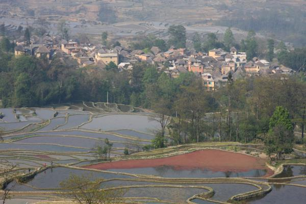 Picture of Hani village and rice terracesYuanyang - China