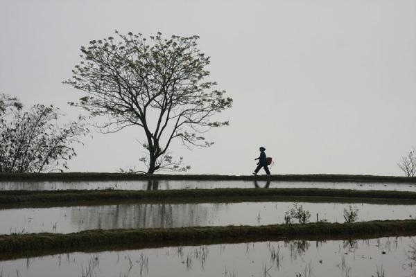 Picture of Hani woman walking over the edge of a rice terrace in YuanyangYuanyang - China