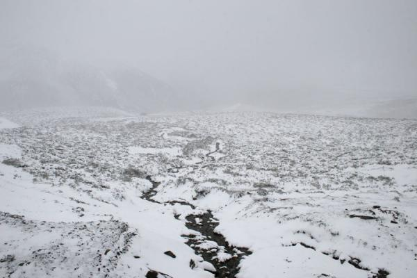 Picture of Snowy white and foggy landscape on our way to Zheduo pass