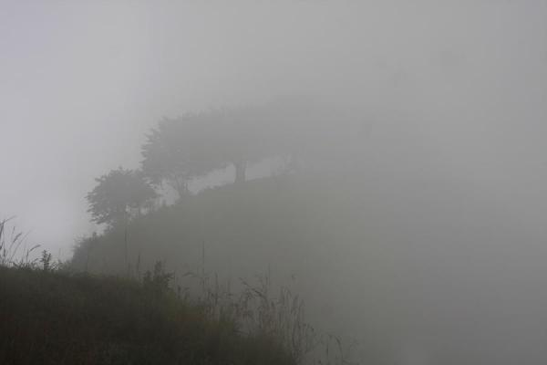 Trees in the early morning fog of El Aguacate | Alto Aguacate tombs | Colombia