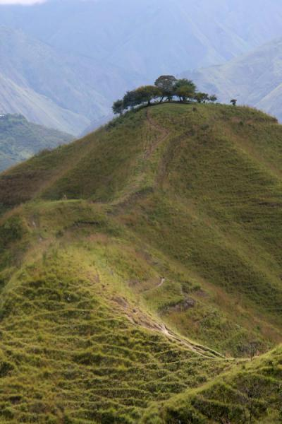 Hill with trees on top on the ridge of El Aguacate | Alto Aguacate tombs | Colombia