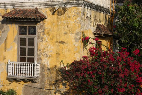 Detail of house with flowers in the old part of Cartagena | Cartagena de Indias | Colombia