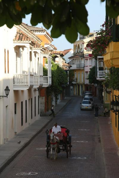 Horse-driven carriage in a street of Cartagena | Cartagena de Indias | Colombia