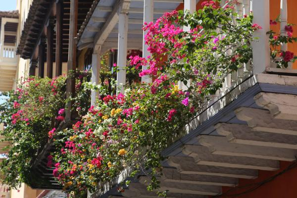 Flowers hanging from balconies are a common sight in Cartagena | Cartagena de Indias | Colombia
