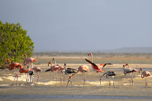 Flamingoes in Bahía Hondita | Guajira Peninsula | 哥伦比亚