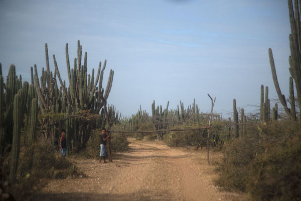 Kids with a boom gate, collecting cookies or money from passing vehicles | Guajira Peninsula | 哥伦比亚