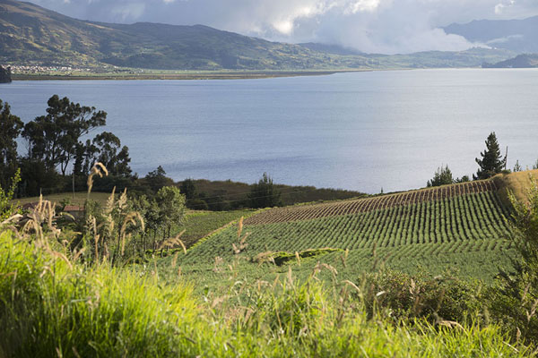 Fields of onions surround Lake Tota | Lago de Tota | Colombie