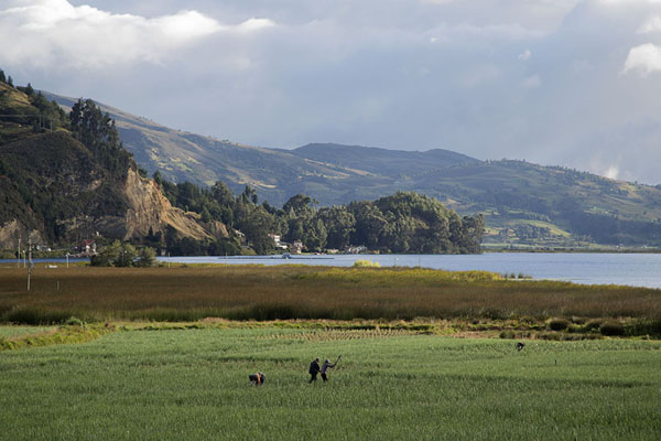 Picture of Farmers working the onion fields near Lake Tota