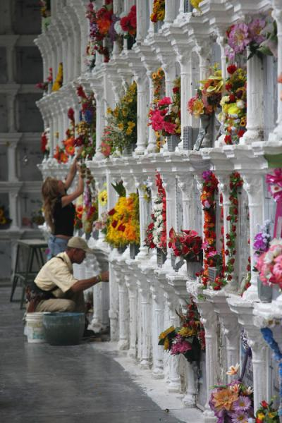 Picture of San Pedro Cemetery Medellín (Colombia): Wall of tombs with flowers