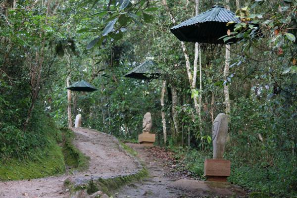 Path leading through the Forest of Statues at San Agustín | Archeological Park San Agustín | Colombia